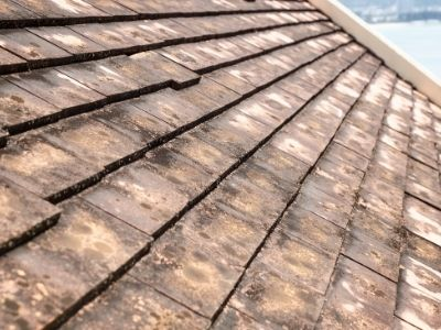 roof mold can happen after winter advises roofing company in maryland